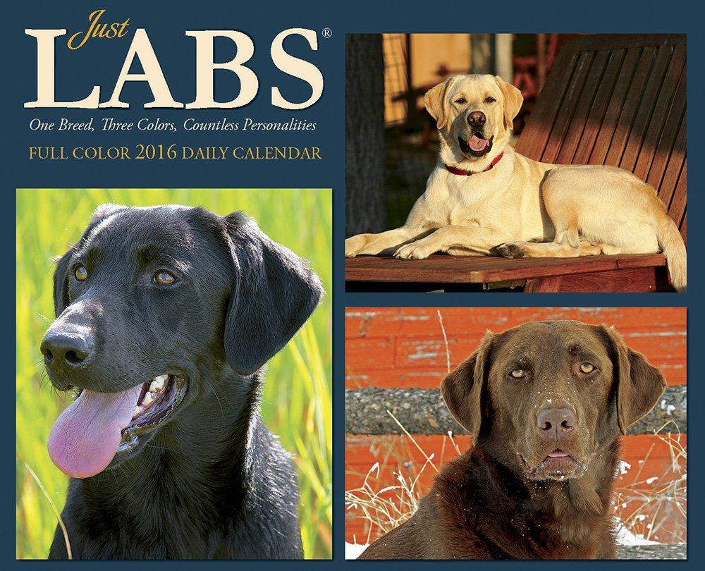 Calendar Labs May : Labrador calendars black yellow chocolate labs
