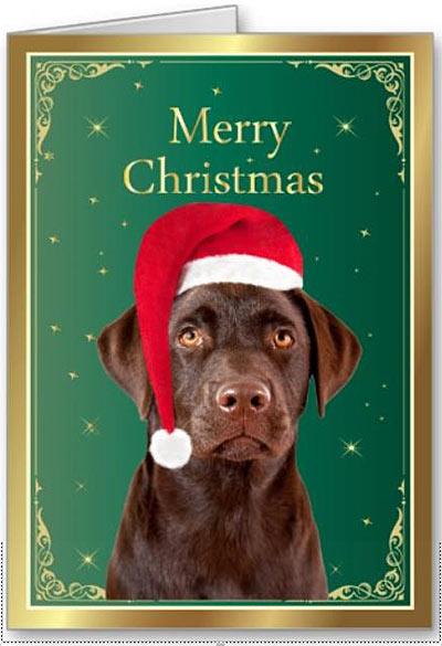 Chocolate Lab Christmas Cards Labrador