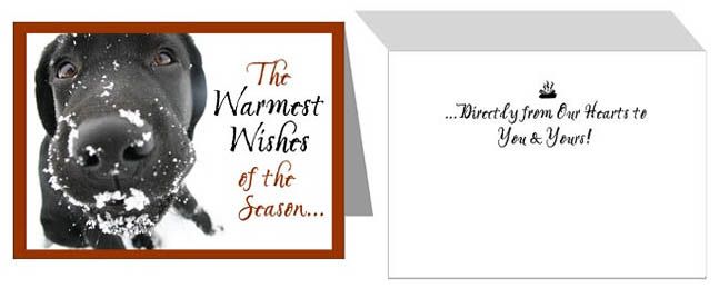 Black Lab Warmest Wishes Holiday Cards