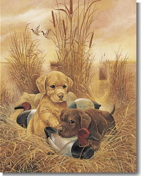 puppies love ducks