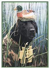 hunting birthday cards  get domain pictures  getdomainvids, Birthday card