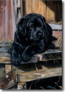 Black Labador Retriever Puppies Labrador Puppy Note Card