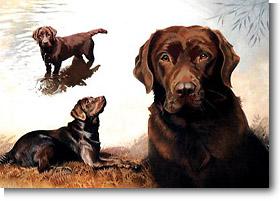 Labrador Retriever Gifts Chocolate Lab Greeting Cards