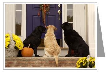 Labrador Retrievers Labradors Greeting Card